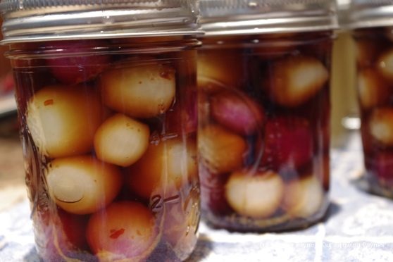 pickled onions 6 2012