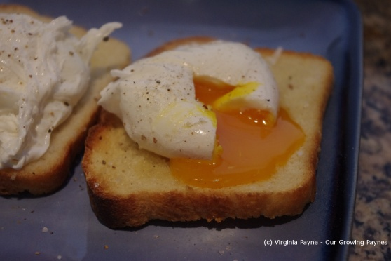 poached eggs 5 2013