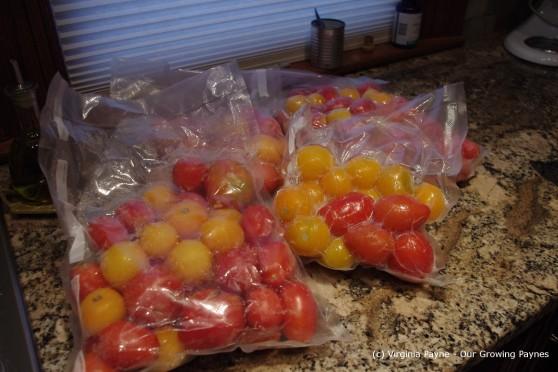tomato sauce 1 2013