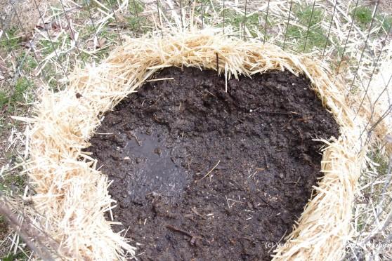 Planting Potatoes 5 2013