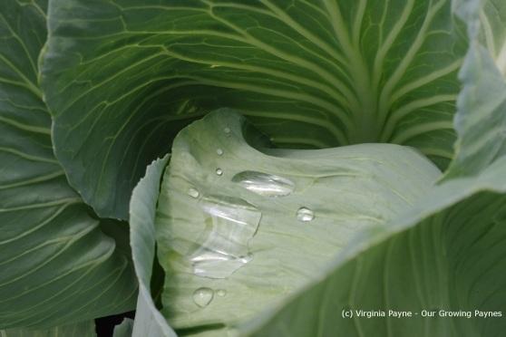 Garden progess 2 2013