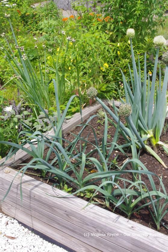 Garden progress 5 2013