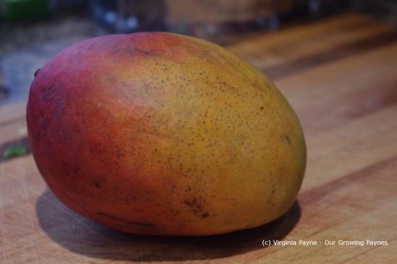 Mango chutney 1 2013