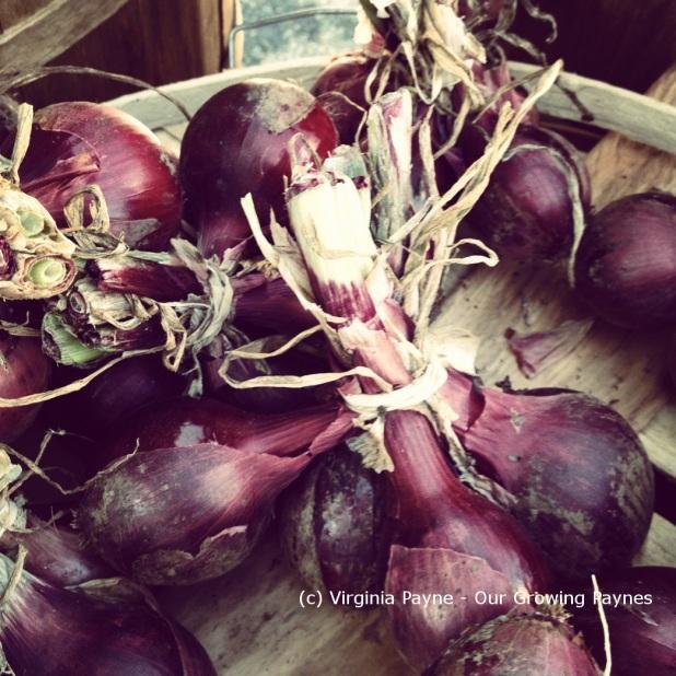 Farmers market 1 2013