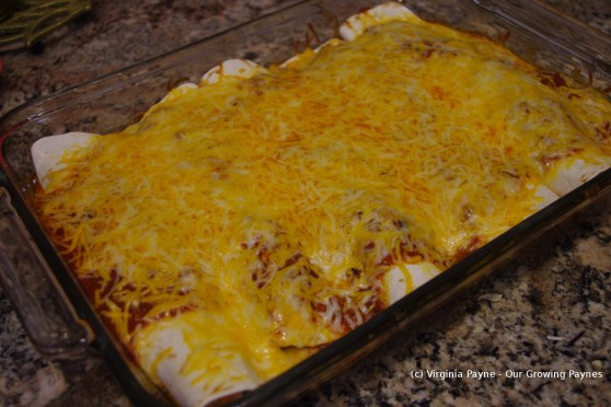Chicken enchiladas 10 2014