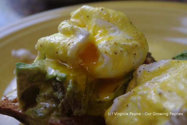 Eggs Benedict 7 2014