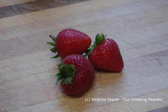 Strawberry cream puff 8 2014