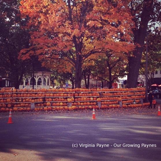 Pumpkinfest 2 2014