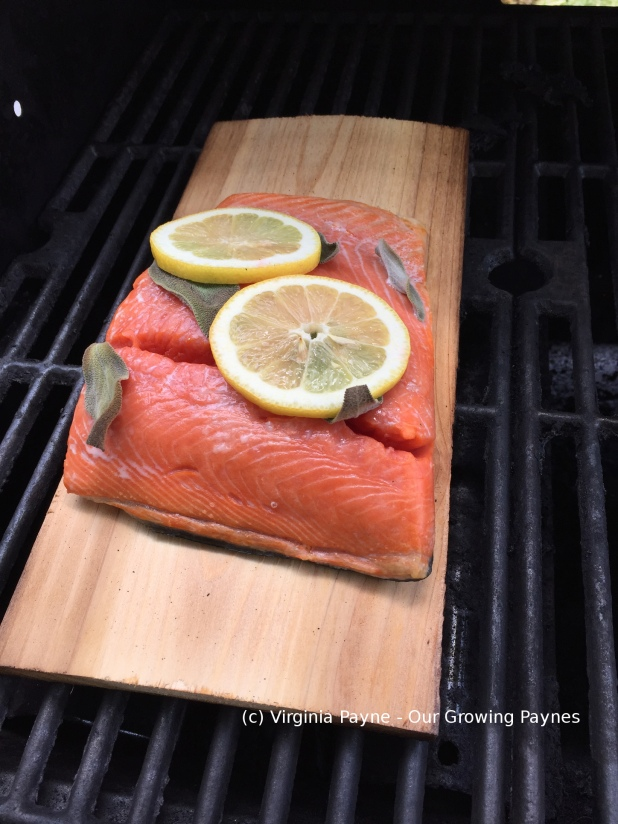 Cedar grilled salmon 4 2015