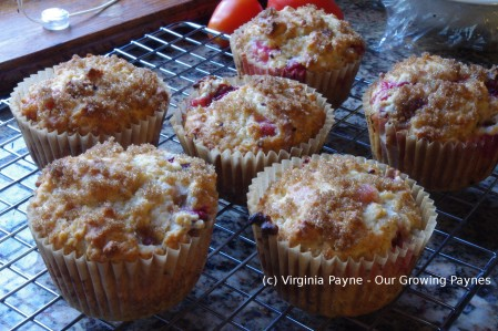 Gooseberry muffins 5 2015