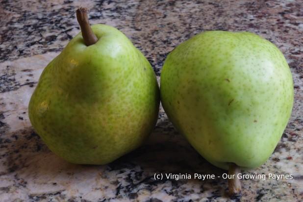 Pear gooseberry cake 1 2016