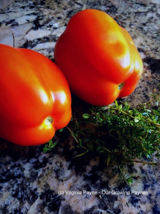 Tomato Jam 1 2017